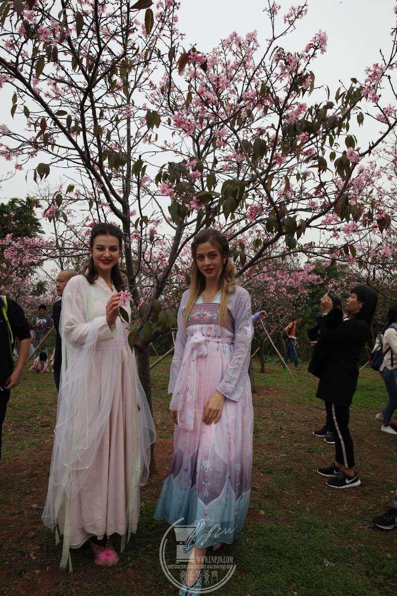 身穿汉服的外籍模特儿在樱花园里走秀.img_0446.jpg